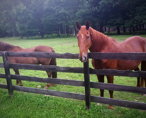 horse fence styles